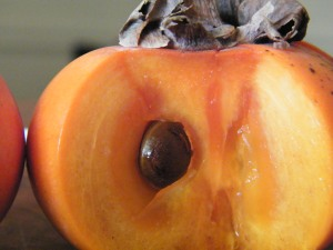 Persimmon seed
