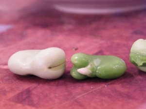 fava with and without membrane