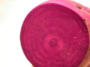 beet circle